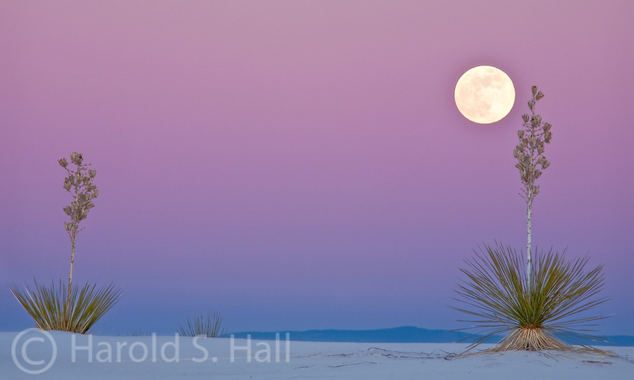 The moon rises at White Sands National Monument in New Mexico behind some yucca plants