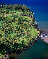 Coconut Palm Trees, Keanae Peninsula, Maui, Hawaii, USA.
