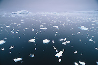 Broken ice floating in water, Antartic Peninsula, Antarctica