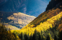 Layers of changing golden aspens near Vail, Colorado seem to echo the arrival of Autumn.