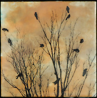 Mixed media encaustic painting with photography, silhouette of birds in bare branches against sunset sky.