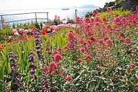 Gardens of Alcatraz with Centranthus ruber, Jupiter's Beard