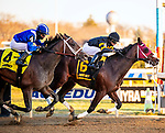 December 7th 2019:  Shotski [#6] won the 106th running of the G2 Remsen for trainer Jeremiah O'Dwyer with Luis Saez in the saddle.  The stakes race was at Aqueduct race track in Ozone Park, New York. Dan Heary/Eclipse Sportswire/CSM.
