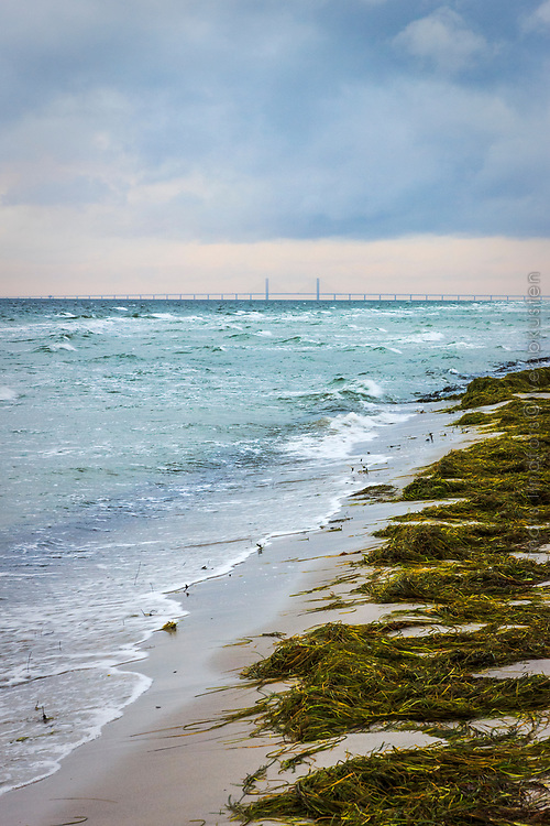 Sandstand med tång vid havet i Skanör Skåne