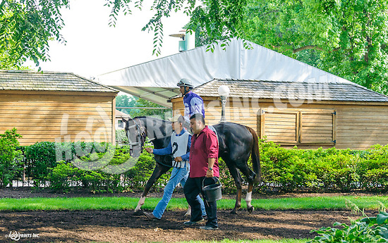 April Gaze before The Christiana Stakes at Delaware Park on 7/6/16