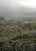 The mountains in the Kapaula region of Maui, Hawaii. Photo by Kevin J. Miyazaki/Redux