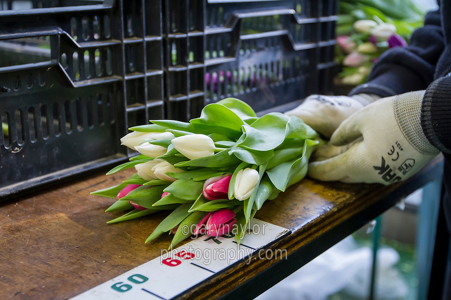 Packing tulips in a packhouse for retail customers, quality control - Lincolnshire, January