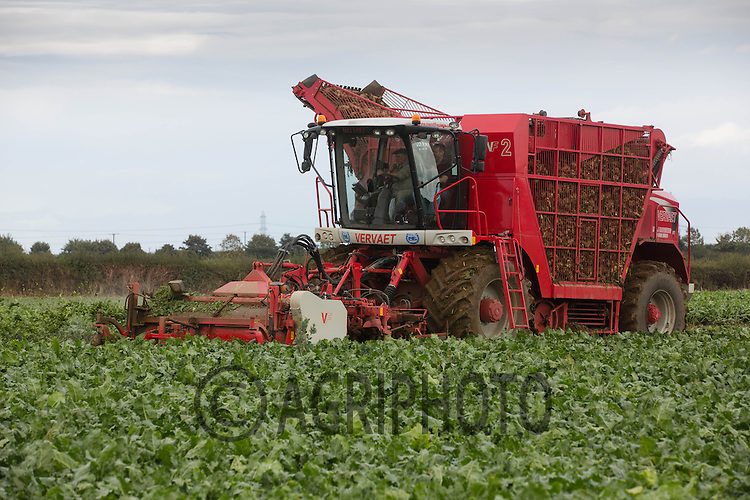 Contractors M &amp; J lifting sugar beet in Lincolnshire<br /> Picture Tim Scrivener 07850 303986