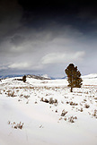 USA, Wyoming, Yellowstone National Park, Blacktail Deer Plateau Landscape