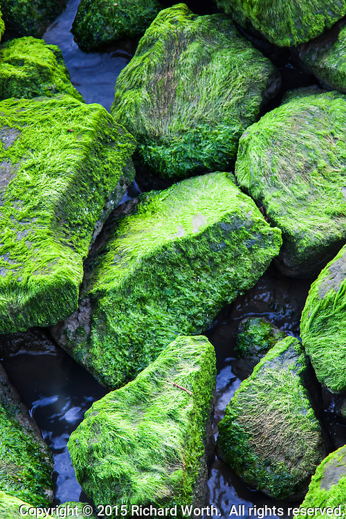 Covered in moss, they look soft.  They're not.  They're rocks.  Big rocks, covered in a deceptively thin coat of green moss.
