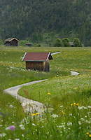 Cattle sheds and winding country lane, Imst district, Tyrol/Tirol, Austria, Alps.