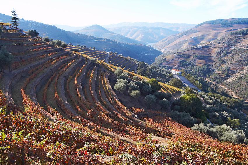 vineyards view to pinhao quinta do noval douro portugal