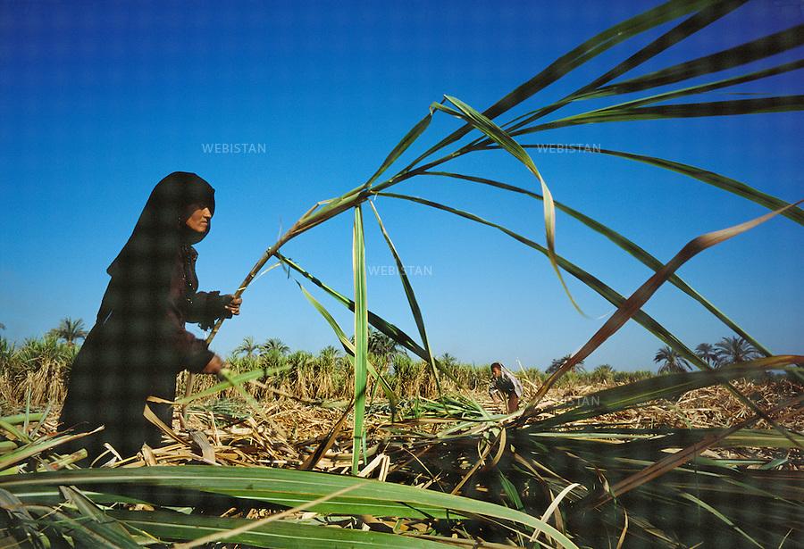 Egypt, 2006.<br />Working the fields.<br />Sugar cane, along with wheat, corn and sorghum, are some of the main crops in Egypt. Most of the crops grow along the banks of the Nile since, apart from a few oases, it remains the only irrigated area in the country.<br />This photo was shot during a reportage on the city of Cairo for National Geographic Magazine.<br /><br />Egypte, 2006<br />Travail des champs. <br />La canne &agrave; sucre, avec le bl&eacute;, le ma&iuml;s et le sorgho, fait partie des principales productions agricoles de l&rsquo;Egypte. Les cultures sont principalement install&eacute;es sur les rives du Nil, car mis &agrave; part quelques oasis, il s&rsquo;agit de la seule partie irrigu&eacute;e du territoire.<br />Image prise dans le cadre d'un reportage sur le Caire pour le National Geographic magazine.