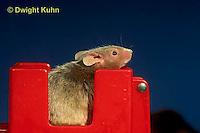 MU60-080z  Pet mouse