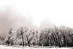 Clearing storm and snow covered trees in Yosemite Valley at Cathedral rock