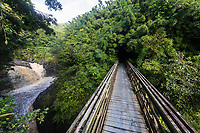 A boardwalk along the Pipiwai Trail in Haleakala National Park, Kiphahulu district, Maui.