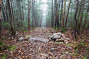 Water bar along the Mt Tecumseh Trail in Waterville Valley, New Hampshire. What is the purpose of the pile of rocks on the right-hand side and how does it benefit the trail? Trail maintenance guidelines suggest only needed stone structures that serve a purpose are to be built along trails.