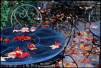 Fall leaves on a table at a cafe in Charlottesvile, Va.