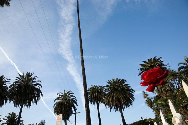 Dracena Drive in Los Feliz.