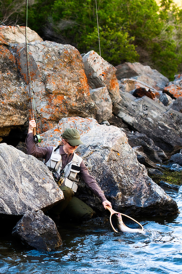 A woman reaches to net a rainbow trout while fly fishing on the Madison River in Bear Trap Canyon.