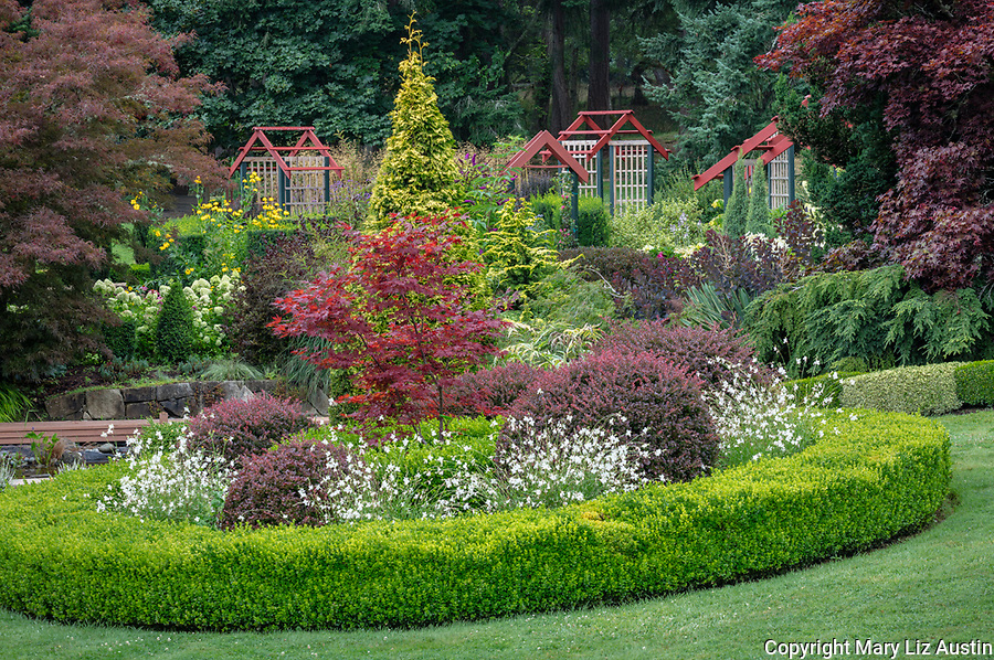 Vashon Island, Washington: Summer perennial garden with boxwood, barberries, maples and evergreens, Froggsong Gardens