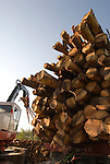 Logs being loaded on log truck