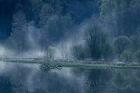 Europe/France/Limousin/23/Creuse/Env Faux-la-Montagne: Brumes sur l'étang