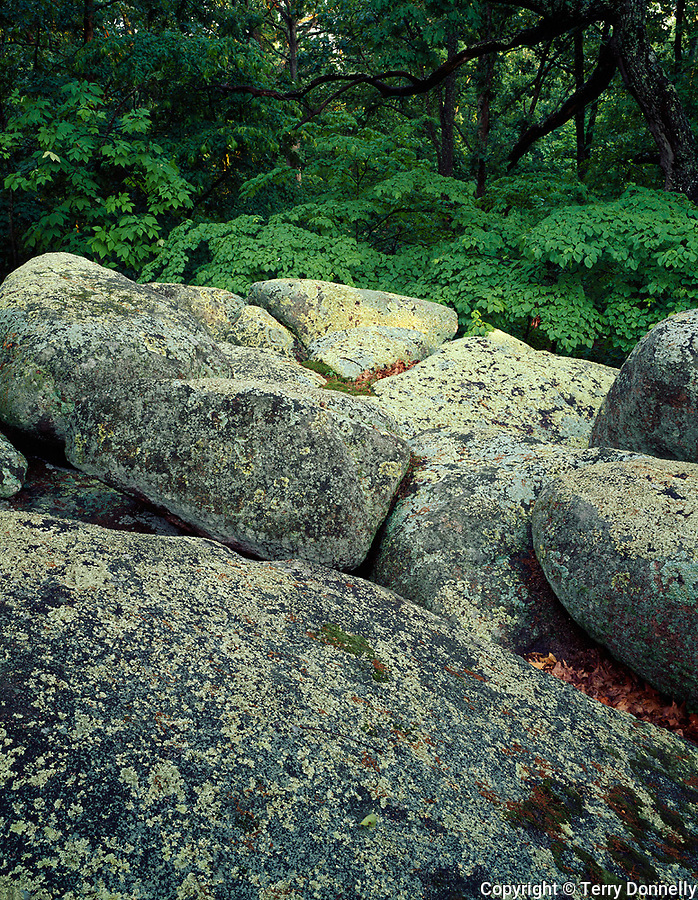 Elephant Rocks State Park, MO<br /> Lichen and moss covered granite boulders dominate the understory of the summer hardwood forest