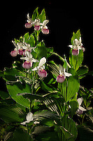 &quot;Minnesota Royalty's Night Life&quot;<br />