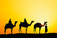 Camels and camel driver silhouetted at sunset, Thar Desert, Udaipur, India.