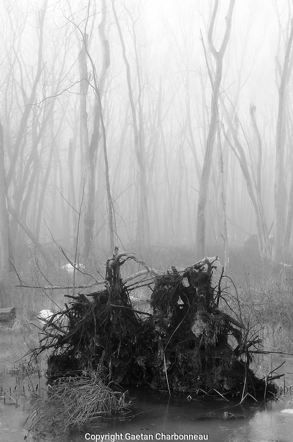 Fallen tree under the fog