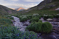 Mountain stream and wildflowers, Bluebells,Mertensia ciliata,Bittercress,Cardamine cordifolia, Ouray, San Juan Mountains, Rocky Mountains, Colorado, USA, July 2007