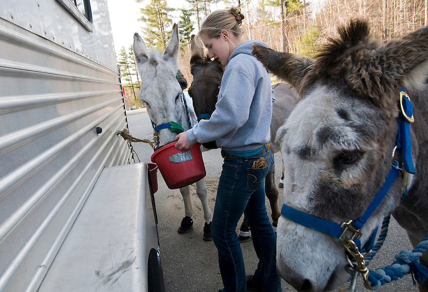 GOFFSTOWN, N.H.--April 9, 2009--Kaitlyn Sutherland, barn manager for the Green Mountain Donkeyball operation, feeds snacks to the donkeys before at game at Mountain View Middle School. .JODI HILTON FOR THE NEW YORK TIMES
