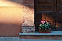 Panicale is a beautiful small walled hill town, known better to the Umbrians than to tourists, to the south of Lake Trasimeno. Apart from its beauty its claim to fame are frescos by Masolino and Perugino in its churches. In the piazza that lies just inside its eastern gate I captured this lovely scene of a late afternoon sunbeam imparting a lovely warm glow to a wall before striking a pot plant on a doorstep, backed by a large oak double door.