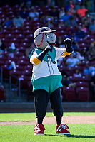 Cedar Rapids Kernels mascot Mr. Shucks dances between innings during a Midwest League game against the Peoria Chiefs on May 26, 2019 at Perfect Game Field in Cedar Rapids, Iowa. Cedar Rapids defeated Peoria 14-1. (Brad Krause/Four Seam Images)