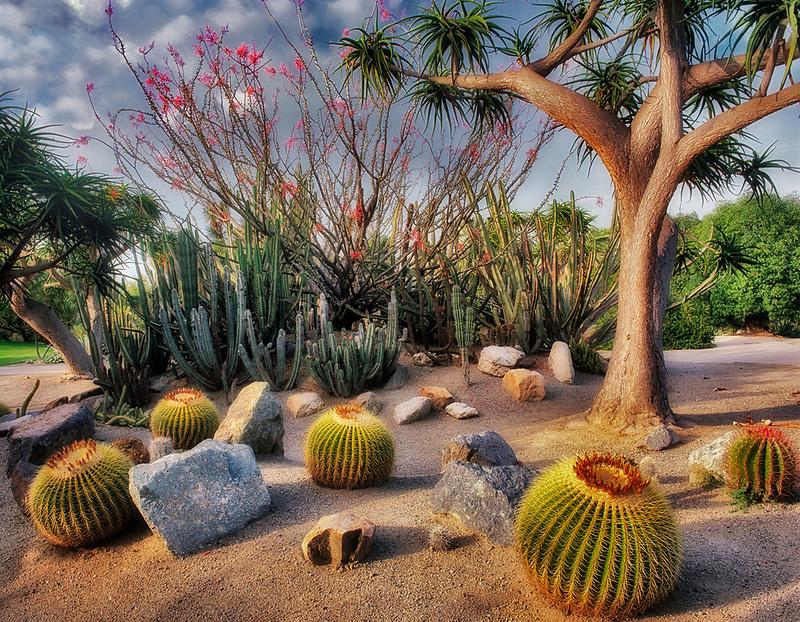 Cactus gardens at Balboa Park. San Diego, California.