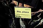 Agave americana, Pita Pitaca, botanical gardens, Rodalquilar, Cabo de Gata natural park, Almeria, Spain, Almeria, Spain
