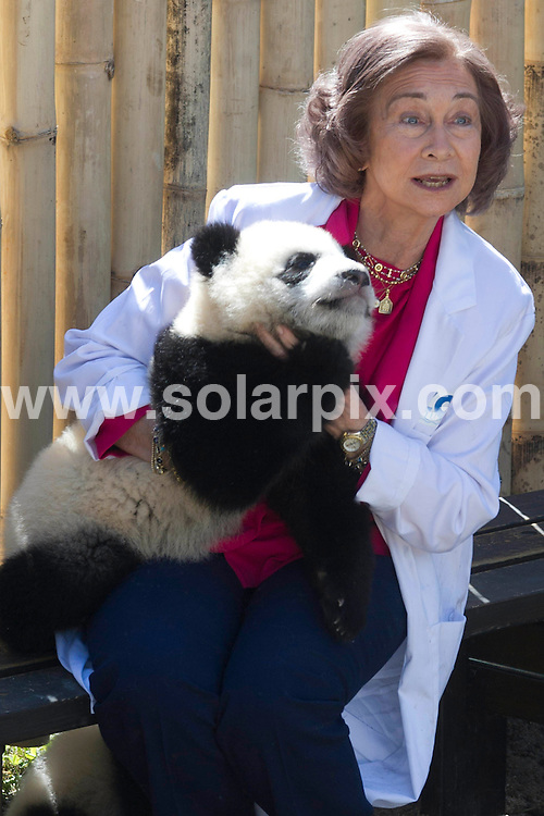 **ALL ROUND PICTURES FROM SOLARPIX.COM**                                             **WORLDWIDE SYNDICATION RIGHTS EXCEPT SPAIN - NO SYNDICATION IN SPAIN**                                                                                  Caption: Queen Sofia of Spain visits Madrid's Zoo to see the  new 6 month old set of pandas was conceived through artificial insemination with assistance from Chinese scientists & born in October 2010.The last time a panda was born at the Madrid Zoo was in 1982.                                                                              .This pic: Queen Sofia                                                                                             JOB REF:13043        DMS/JETXU       DATE: 29.03.2011                                                           **MUST CREDIT SOLARPIX.COM OR DOUBLE FEE WILL BE CHARGED**                                                                      **MUST AGREE FEE BEFORE ONLINE USAGE**                               **CALL US ON: +34 952 811 768 or LOW RATE FROM UK 0844 617 7637**
