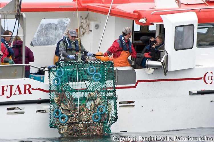 Turister er med på fiske etter Kongekrabbe i Kjøllefjord. ---- Tourists on crab fishing boat in Kjøllefjord.
