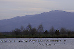 Israel, Upper Galilee, the Hula lake
