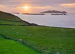 County Kerry, Ireland: Sunset over Blasket Sound and the Blasket Islands from Dunmore Head (mainland's most westerly point) on the Dingle Peninsula