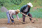 Men Cultivating Field