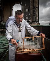 Berlin, Imker Uwe Marth am Mittwoch (22.05.13) auf dem Dach des Berliner Doms anlässlich Vorstellung einer Bienen-App. Ministerin Ilse Aigner besichtigt Bienenstöcke auf dem Dach des Berliner Doms und stellt neue Bienen-App vor.