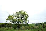 Europa, DEU, Deutschland, Nordrhein Westfalen, NRW, Bergisches Land, Oberbergisches Land, Reichshof, Typische Landschaft, Baum, Eiche, Eichenbaum, Kategorien und Themen, Natur, Umwelt, Landschaft, Jahreszeiten, Stimmungen, Landschaftsfotografie, Landschaften, Landschaftsphoto, Landschaftsphotographie, <br /> <br /> [Fuer die Nutzung gelten die jeweils gueltigen Allgemeinen Liefer-und Geschaeftsbedingungen. Nutzung nur gegen Verwendungsmeldung und Nachweis. Download der AGB unter http://www.image-box.com oder werden auf Anfrage zugesendet. Freigabe ist vorher erforderlich. Jede Nutzung des Fotos ist honorarpflichtig gemaess derzeit gueltiger MFM Liste - Kontakt, Uwe Schmid-Fotografie, Duisburg, Tel. (+49).2065.677997, archiv@image-box.com, www.image-box.com]