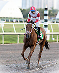 HALLANDALE BEACH, FL - JAN 13:Shining Copper #5 with Jose Ortiz on board heads to the winner's circle after winning the $200,000 Fort Lauderdale Stakes for trainer Michael J. Make at Gulfstream Park on January 13, 2018 in Hallandale Beach, Florida. (Photo by Bob Aaron/Eclipse Sportswire/Getty Images)
