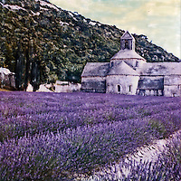 Abbaye Notre-Dame de Sénanque ablaze with fields full of lavendar in bloom. Residence and visitors both enjoy the idealic setting and comfort of this abbaye.<br />