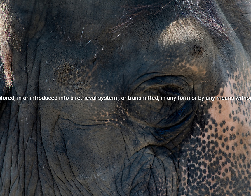 Close upof Elephant Eye