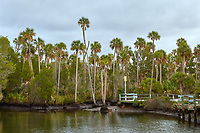Coastal landscape scene near Weeki Wachee in Hernando County