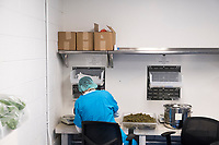 A worker performs a final trim and weighs 1/8th ounce portions of cannabis flower packaging the cannabis in dram bottles in the packaging department at the production and packaging facility for Garden Remedies, a medical cannabis producer, in Fitchburg, Massachusetts, USA, on Fri., Feb. 22, 2019.