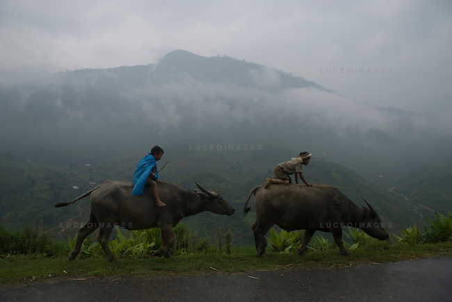 Vietnamese boys ride their water buffalo home to his minority village outside of Sapa, Vietnam.